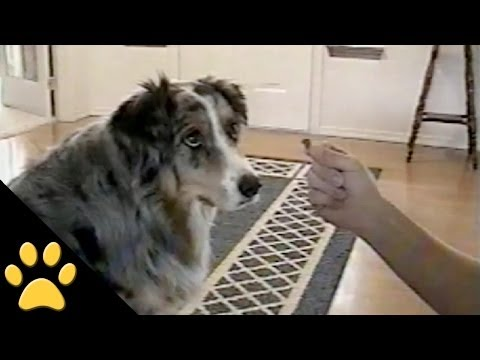 Smart Dog Refuses To Take Treats From The Dog Catcher
