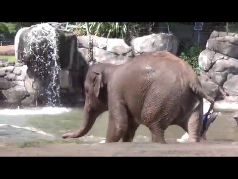 A day at the auckland zoo