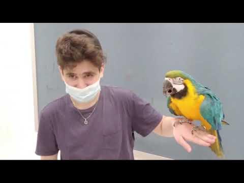 Parrot Rebbe Comes to Shalom Torah Academy!