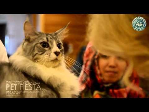 KKM\Fife\Royal Canin International Cat Show 2016 @ Setia Convention Centre