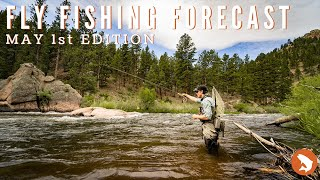 Fly Fishing Forecast May 1st Edition