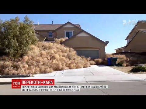 У США понад 150 будинків завалило кучугурами з покотиполя