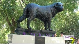 В Черноморске открыли памятник собаке, которая более 10 лет ждала хозяина