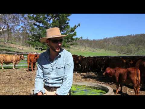 Visitoz video from 2014, explaining the programme