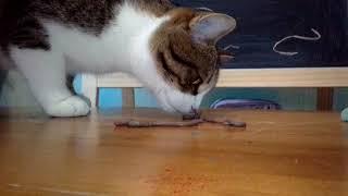 """Эксперимент """"Черви и кот"""""""