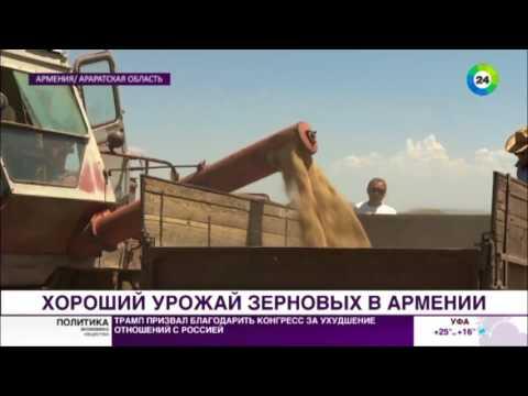 Армения надеется на крупный урожай зерна, несмотря на непогоду