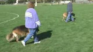 Off-leash Dog Obedience - The Dog Squad - Dublin, Ca