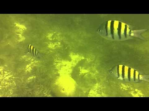 marine fish in cuba