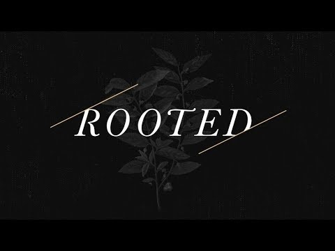 Rooted pt. 1 | Roots & Fruit
