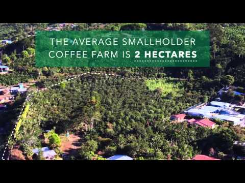 How big is a hectare?