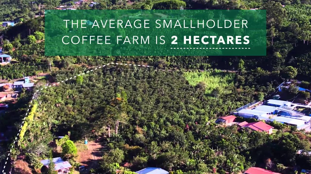 How Big Is A Hectare