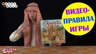 Настольная игра Camel UP — Правила игры