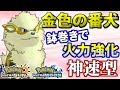 【ポケモンUSUM】金色に輝くウインディ!鉢巻きのパワーで攻めまくる