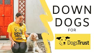 Down Dogs for Dogs Trust | 40 Minute Yoga Practice | Yoga With Orlaith