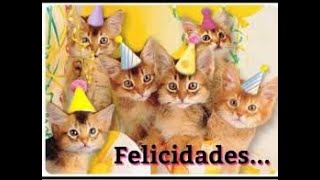 Cães e gatinhos fofos engraçados, compilação 01 de animais engraçados,gatinhos mais fofos do mundo