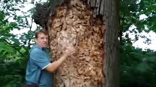 УЖАС!!!! ЧЕРВИ - УБИЙЦЫ !!!!!   Who kills trees?