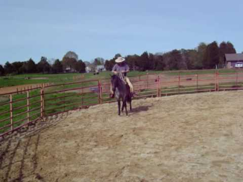 2yr old colts first ride