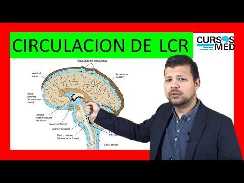 Fisiopatología de la hidrocefalia en diagrama de flujo