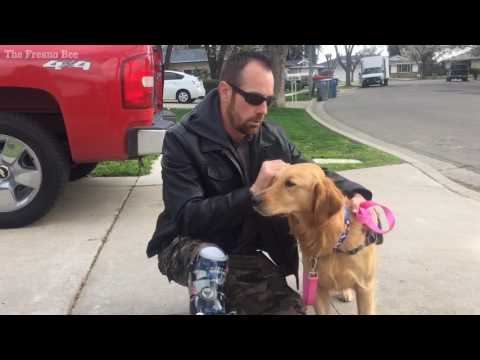 Service dog for a military veteran