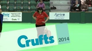 Inter-regional Obedience - Novice Class - Part 1 | Crufts 2014