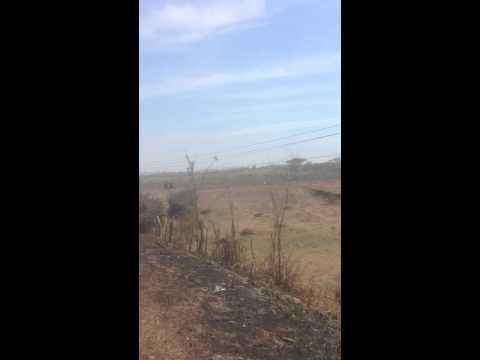 Ran Out Of Gas Near Trinidad