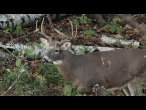 How To Bowhunt Big Bucks In The Morning