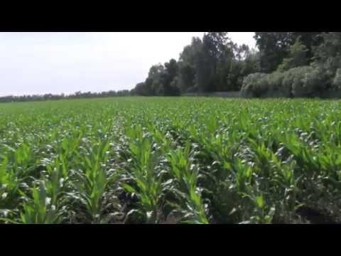 Where Do Farmers Get Their Seeds?