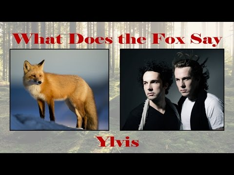 PictureLyrics Ylvis What Does the Fox Say