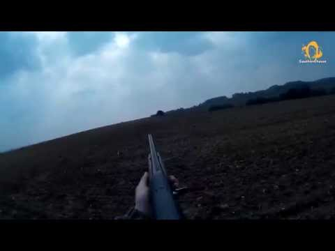 Chasse Du Pigeon Ramier/Palombe - Ouverture 2014/2015 - Wood Pigeon Hunting