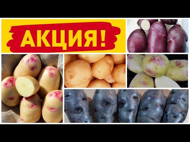 Акция «5 счастливых дней»: скидка 25% на семенной картофель 25-31 марта!