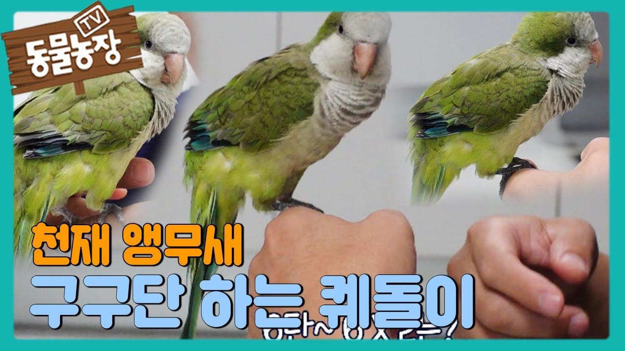 [깜놀] 구구단 하는 퀘돌이, '천재 앵무새' 등극! I TV동물농장 (Animal Farm) | SBS Story