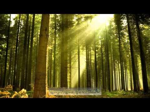 Интегрированное занятие Тема Здравствуй, лес, полон