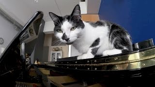River Flows in You (Cover) with Kodi the Cat