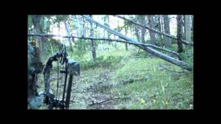Wyoming Archery Elk Hunt Matt Swartz Bow Close Encounter