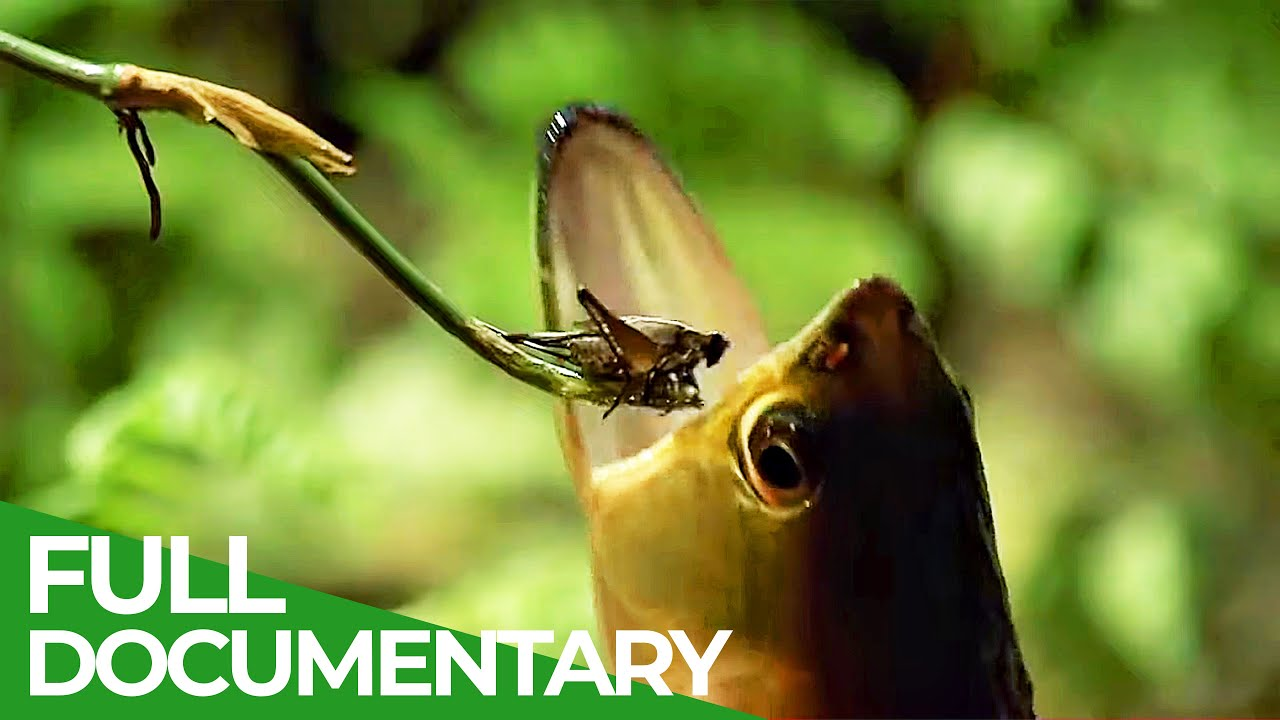 Wildlife Laws: The Better Swimmer Wins   Free Docuementary Nature