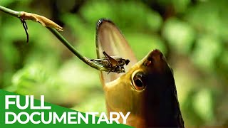 Wildlife Laws: The Better Swimmer Wins | Free Docuementary Nature