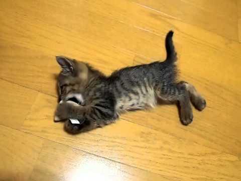 ガリガリ子猫がきて3日目の夜