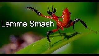 Lemme Smash - Mantis and Spider Edition