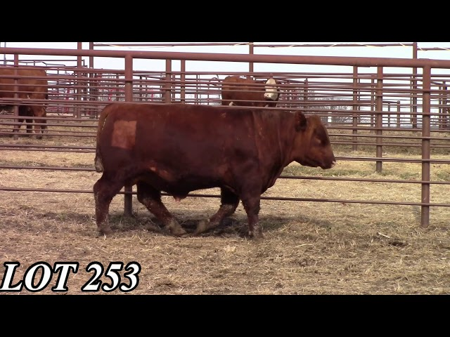 Mead Angus Farms Lot 253