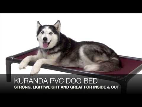 best-dog-bed-reviews
