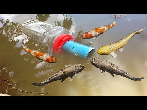 Unique Fish Trapping Using Big Plastic Bottle That Work 100% By Smart Boy