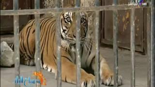 «حدائق الحيوان» تنهي استعداداتها لاستقبال الزائرين خلال عيد الأضحى.. فيديو