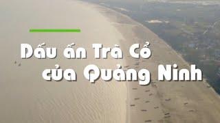 Dấu ấn Trà Cổ của Quảng Ninh - S Việt Nam - Travel in Vietnam - Du lịch Việt Nam