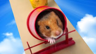 Hamster obstacle road chaĮlenge !! Obstacle Course by Life of Pets Hamham