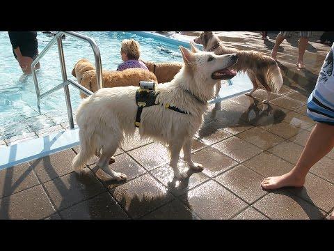 Hondenzwemmen Hoek van Holland 2014