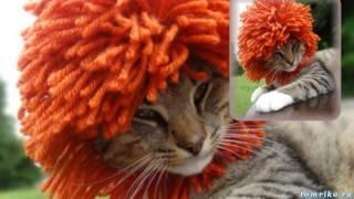 Одежда для животных вязаные шапочки