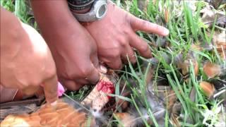 Vegetarian Girl Kills A Chicken