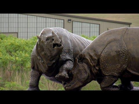 Meet the Ashfall Rhinos