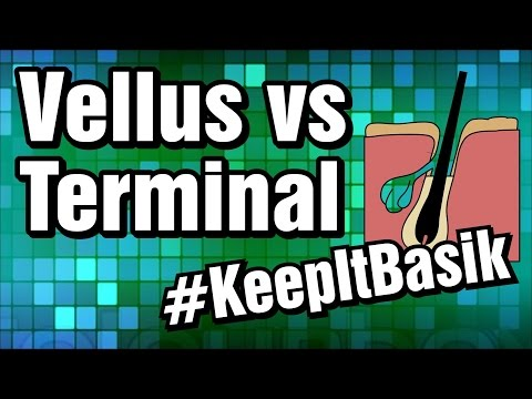 Vellus vs Terminal Hair - #KeepItBasik