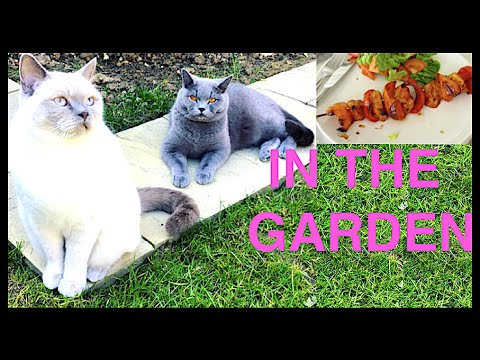 CATS PLAYING IN THE GARDEN! | CHRIS & EVE